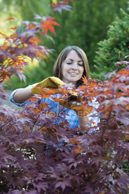 Mulher pruing as folhas de uma árvore de acer. — Fotografia de Stock