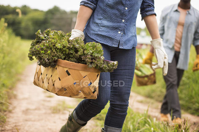 Woman holding handful of fresh vegetables — Stock Photo