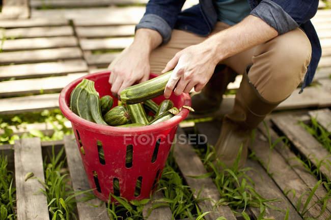 Man sorting fresh picked vegetables — Stock Photo