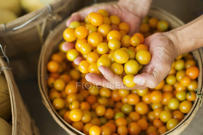 Man holding bowl of tomatoes — Stock Photo