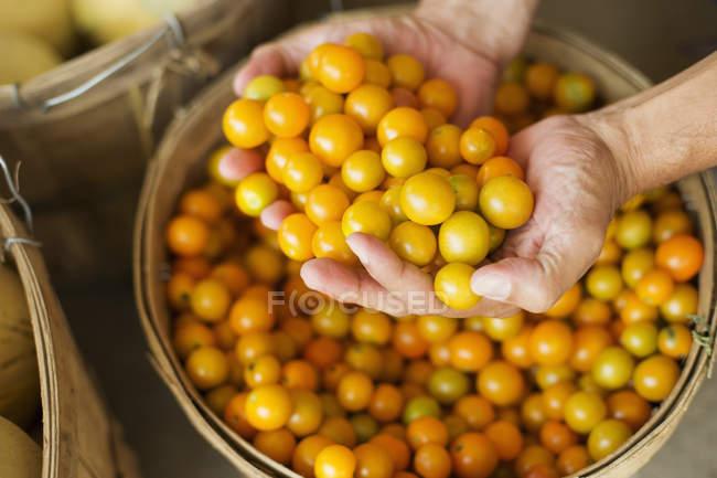 Uomo che tiene ciotola di pomodori — Foto stock