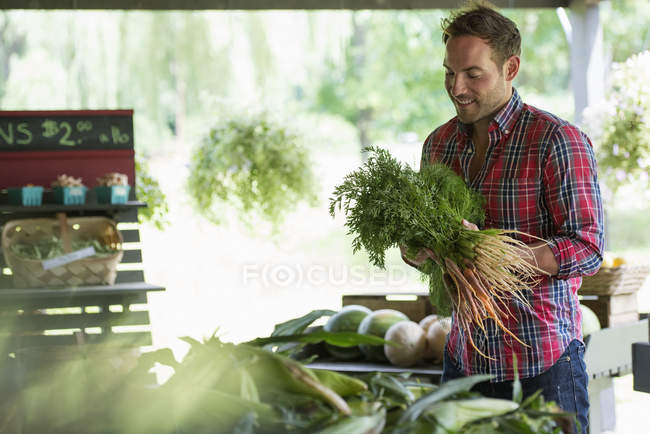 Man holding bunches of carrots — Stock Photo