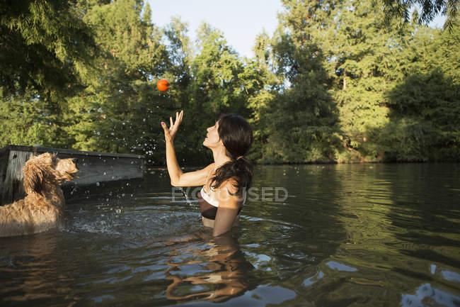 Жінка плавання з двох собак в озеро — стокове фото