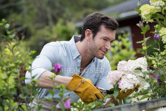 Man working, tending the plants. — Stock Photo