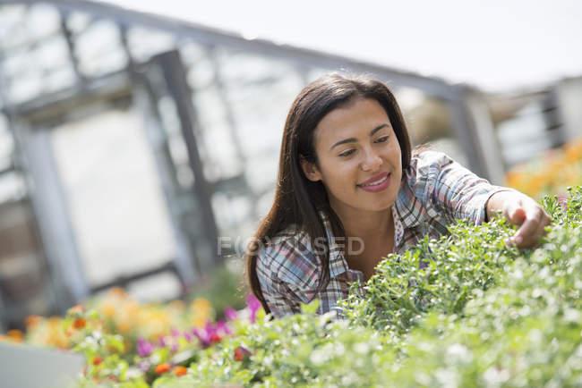 Woman in an organic nursery — Stock Photo
