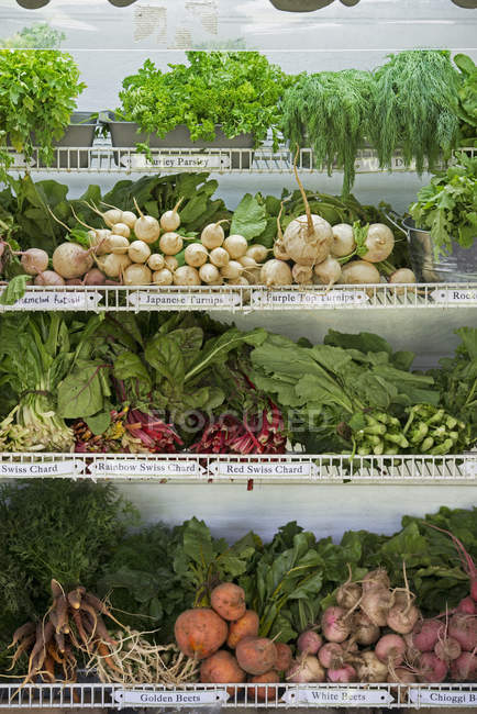 Rows of freshly picked vegetables — Stock Photo