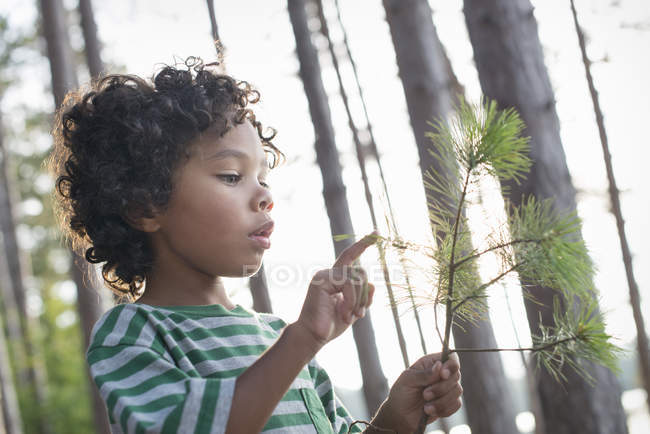 Child holding a tree branch — Stock Photo