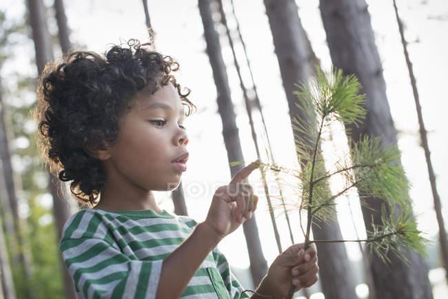 Дитина тримає гілці дерева — стокове фото