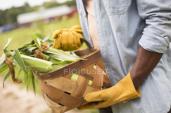 Man holding basket full of corn — Stock Photo