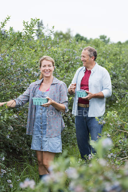 Couple picking berry fruits from bushes — Stock Photo