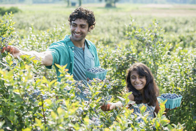 Girl and man standing surrounded by blueberry plants — Stock Photo