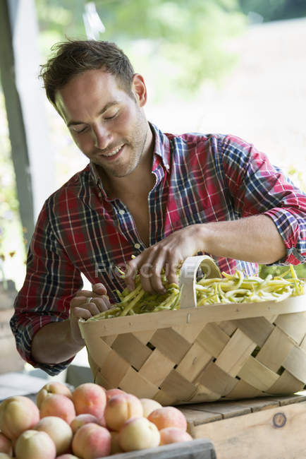 Man sorting beans in a basket — Stock Photo