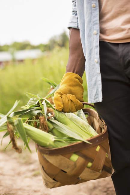 Working on an organic farm — Stock Photo