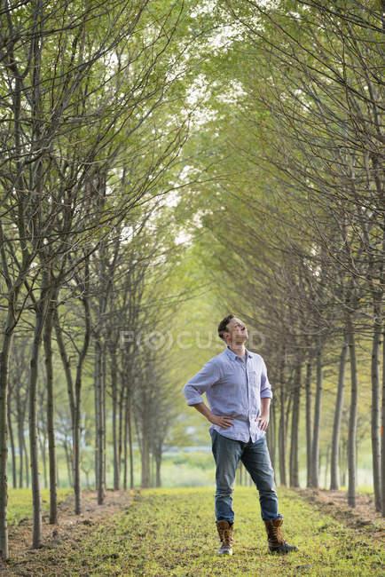Homem de pé em uma avenida de árvores — Fotografia de Stock
