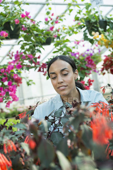 Woman working in a plant nursery — Stock Photo