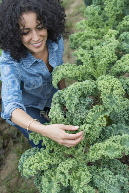Woman working among the kale — Stock Photo