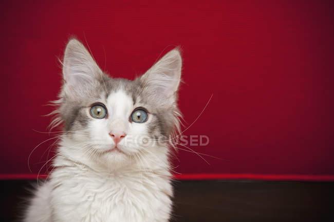 Kitten with eyes wide open — Stock Photo
