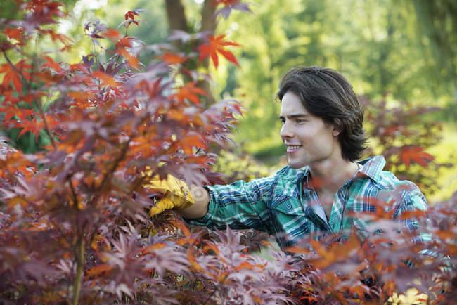 Homem em um viveiro de árvores — Fotografia de Stock