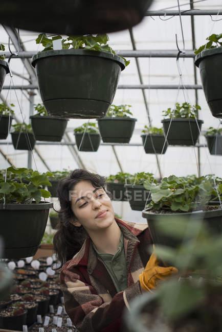 Mulher, verificação de plantas e mudas — Fotografia de Stock
