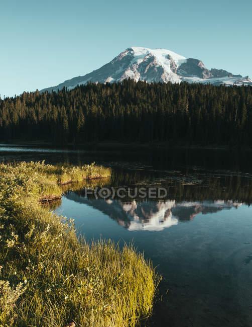 Parco nazionale del Monte Rainier — Foto stock