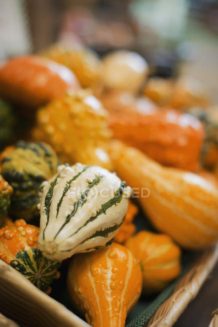 Squashes of different shapes and sizes. — Stock Photo