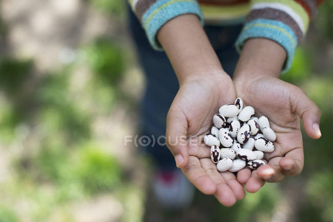 Boy holding out handful of beans — Stock Photo