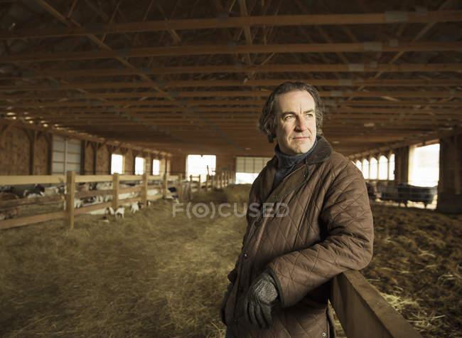 Landwirt in einer Scheune Vieh — Stockfoto