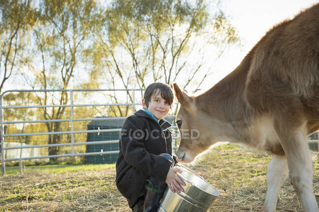 Boy feeding a calf by bucket — Stock Photo