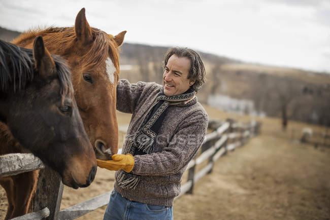 Hombre acariciando caballos - foto de stock