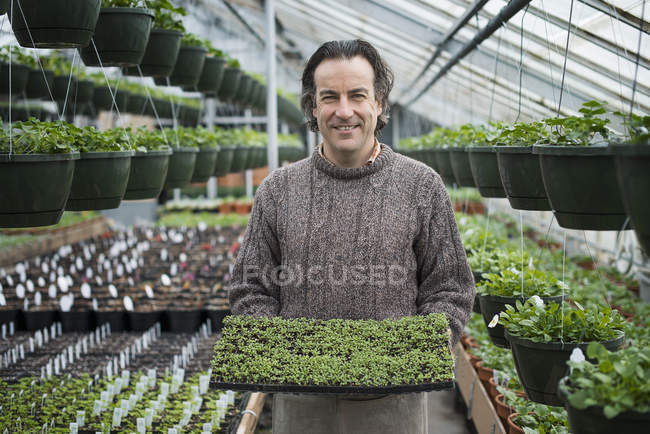 Man holding a tray of green seedlings. — Stock Photo
