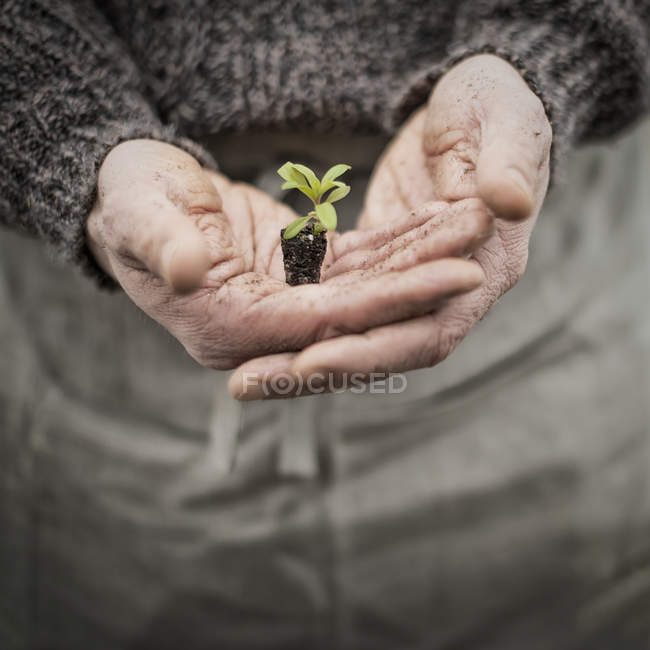 Mudas de planta pequena exploração pessoa — Fotografia de Stock