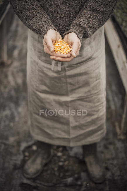 Man holding handful of plant seeds. — Stock Photo