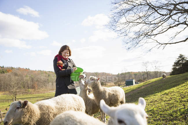 Woman with a bucket feeding the sheep — Stock Photo