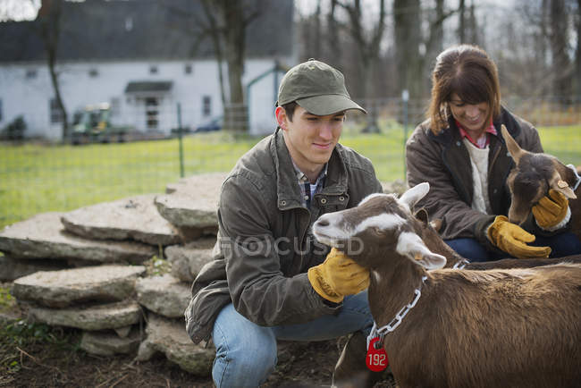 Farmers working on farm and tending goats. — Stock Photo