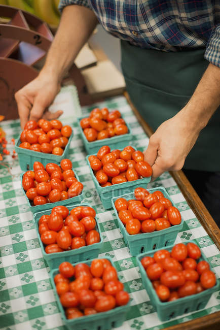 Man arranging a row of punnets of tomatoes. — Stock Photo