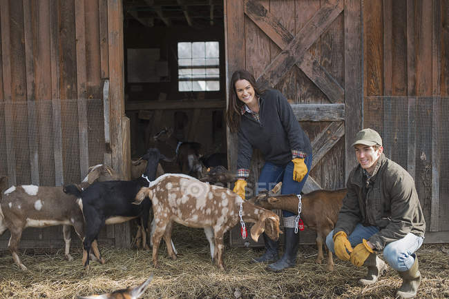 Farmers working on farm and tending to goats — Stock Photo