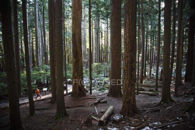 Man walking up a trail — Stock Photo