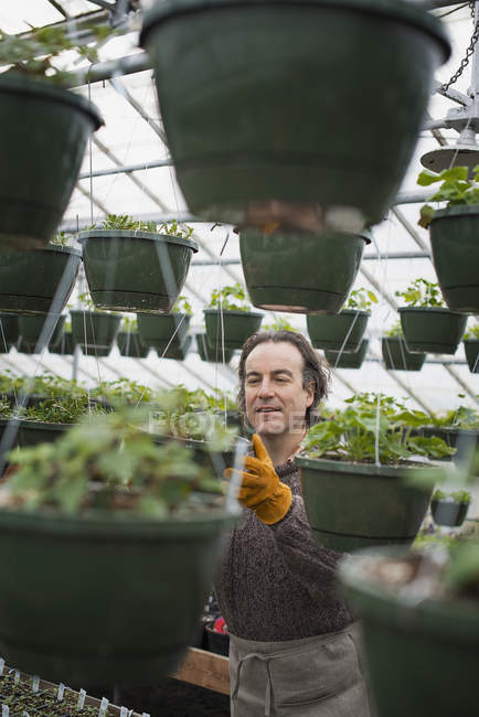 Man in a glasshouse planting containers. — Stock Photo