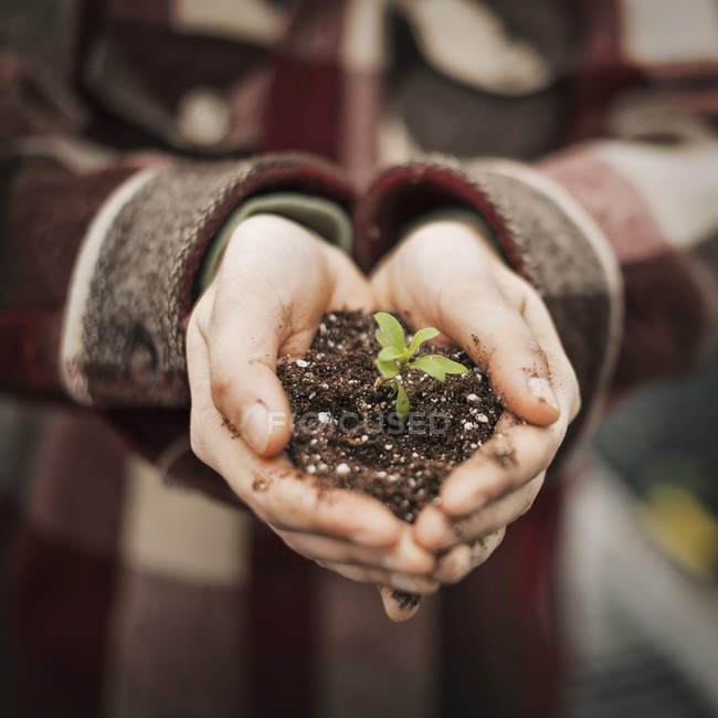 Person holding a small plant seedling in soil — Stock Photo