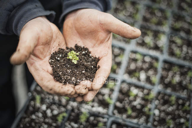 Healthy new seedling in hands — Stock Photo