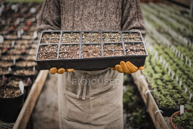 Man holding trays of young plants — Stock Photo