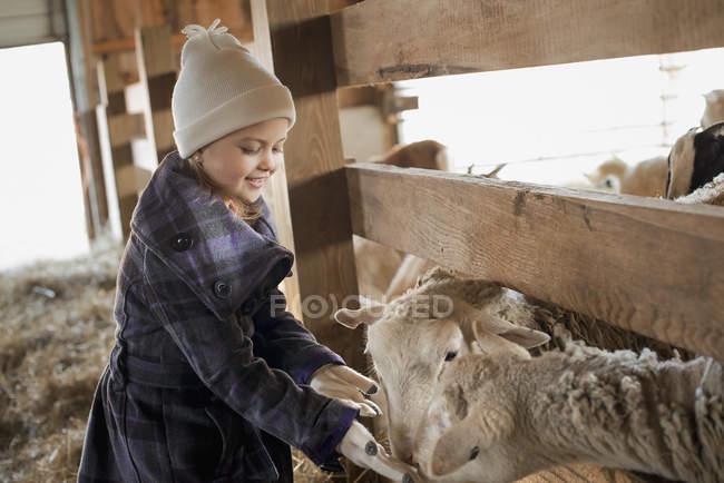 Bambino nella stalla degli animali — Foto stock