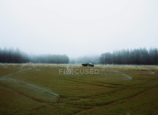 Crops growing in the fields — Stock Photo