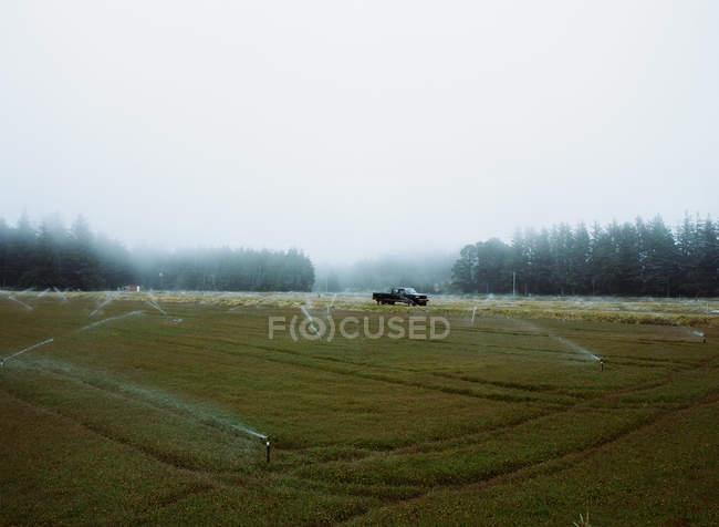 Cultivos que crecen en los campos - foto de stock