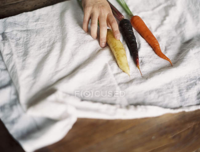 Person arranging fresh carrots — Stock Photo