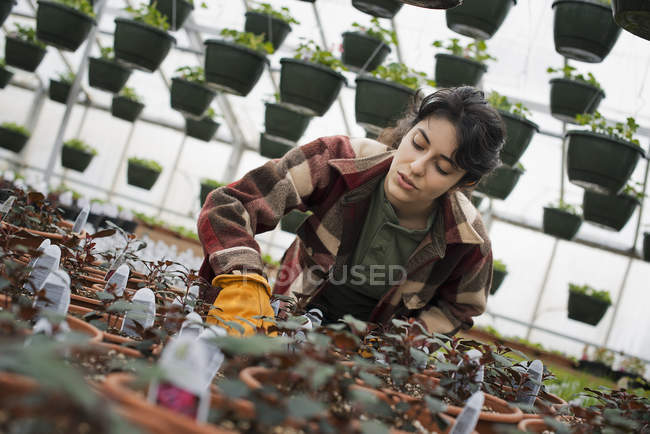 Woman checking plants and seedlings. — Stock Photo