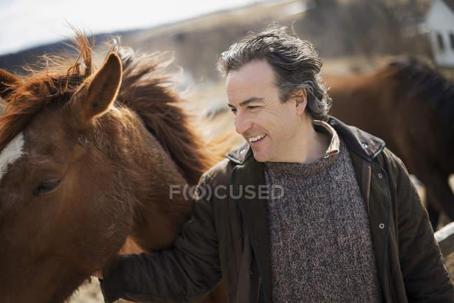 Man patting horse — Stock Photo