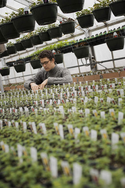 Organic plant nursery glasshouse — Stock Photo