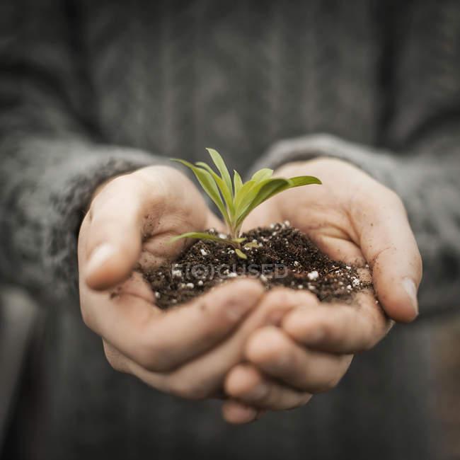 Pessoa titular de mudas de plantas pequenas no solo — Fotografia de Stock