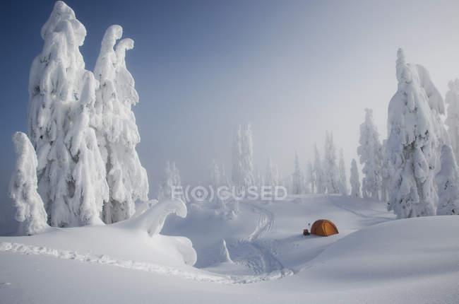 Tenda arancione tra gli alberi innevati — Foto stock